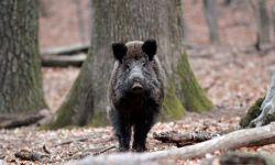 Diversitatea habitatelor şi faunei de interes vânătoresc